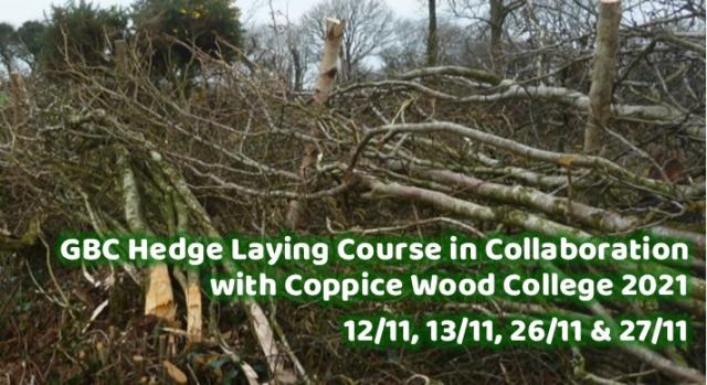 Hedge Laying with Coppicewood College